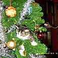 Wilma esplora l'albero