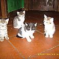 Uta, Ossian, Fingal, Erin
