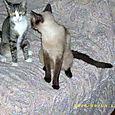 Wilma e Freya