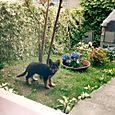 Zara da piccola in giardino