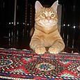 Rabarbaro: questo è il tappeto che preferisco!
