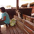 gatto a Petra dai ricordi di viaggio di  Isabella