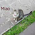 Miao83