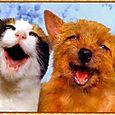 Cane e Gatto amici-     Per noi che...