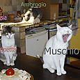 Zampetta Muschio Ambrogio e Ambrosia