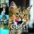 Gatti 1001 fotografie