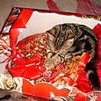 Habibi confeziona i regalini di Natale