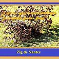 Zig di Nantes