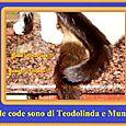 Code di Teodolinda e di Muni