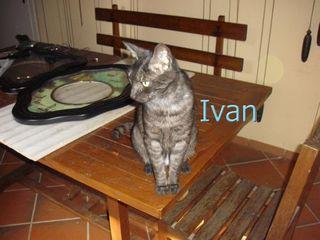 Ivan tavolo