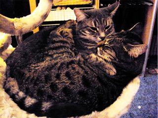 Lillo e Camilla
