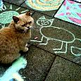 Gatto-artista