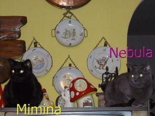 Mimina e Nebula