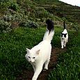 Isha e Anur che vivono a Tenerife con Daniela