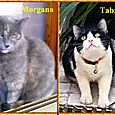 Morgana e Tabata