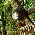 Greta la pappagalla affettuosa delle Maldive