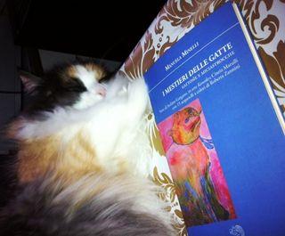 Cocò-è davvero una lettura rilassante!