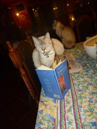 Alcmena è immersa nella lettura