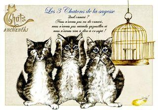10 les trois chatons de la chagesse