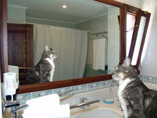 7patuffo specchio