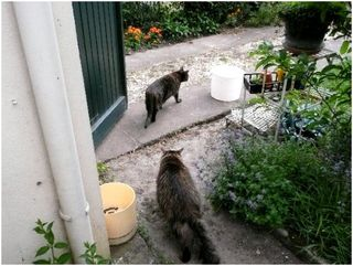 Jardin s curis pour les chats giardino messo in for Anti chats jardin