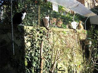 Gatti fatti e misfatti - Recinti per giardino ...