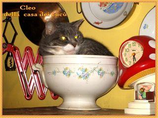 1 Cleo