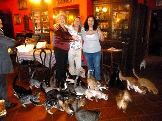Tre grazie e piccioni felini