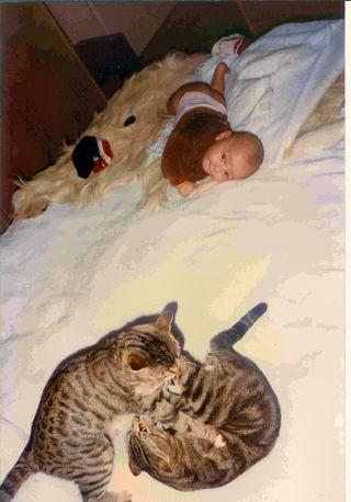 Elia e gatti 2