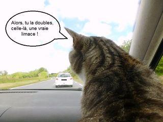 Chipie en voiture