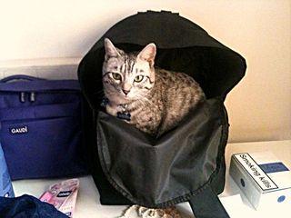 Merlino in valigia
