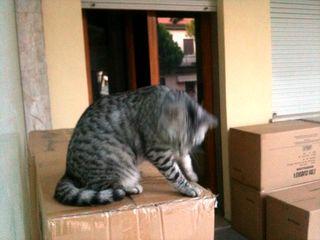 Merlino e  gli scatoloni del vicino