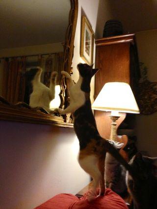 Sophie specchio