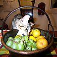 Brocc aime les fruits (Brocc vive con Daniela a Milano)