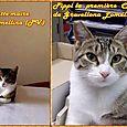 Marina e Pippi le Gatte -Sindaco di Gravellona lomellina
