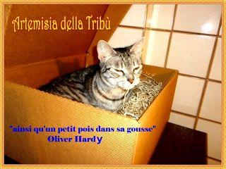 1 b Artemisia scatola tonina  - Copia