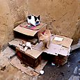 Condominio felino a Fez