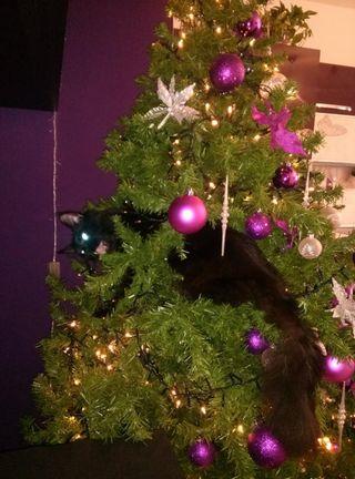 7c albero