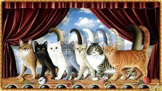 000 compagnia felina commedia
