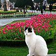 gatto marocchino