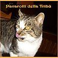 Pavarotti della Tribù