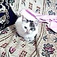 Lilla Lucilla di Laura