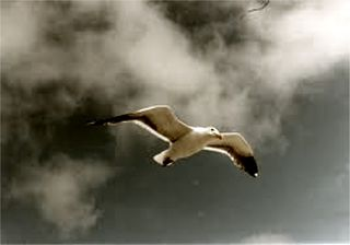 7 jonathan livingston