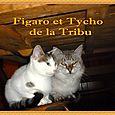 Figaro e  Tycho