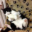 Tabata: un genio travestito  da gatta