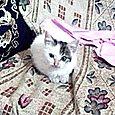 Lilla lucilla