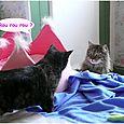 Eowin et Colibri, les  chats  de Claire