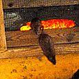due dei topini che vivono con le caprette e l'ariete
