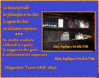 Alain angélique iris