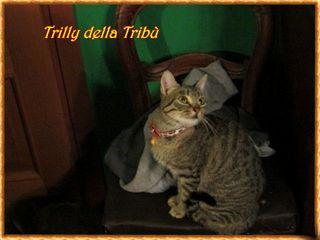 2  trilly